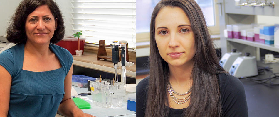 <p class='flashheadline'>NFES Assistant Professor and PhD Student Awarded Grant</p><p class='flashsubtitle'>Dr. Gloria Salazar Aranda and Rafaela Feresin were awarded a Committee on Faculty Research Support (COFRS) grant by the FSU Council on Research and Creativity (CRC).</p><p><a href='/About/CHS-News/Banner-Stories/NFES-Assistant-Professor-and-PhD-Student-Awarded-Grant' class='super_more_link'><img src='/design/topnav/images/more.gif'/></a></p>
